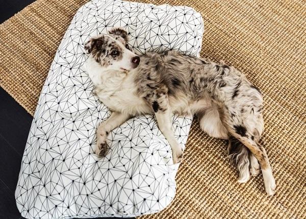 寵物睡墊, 狗狗睡墊