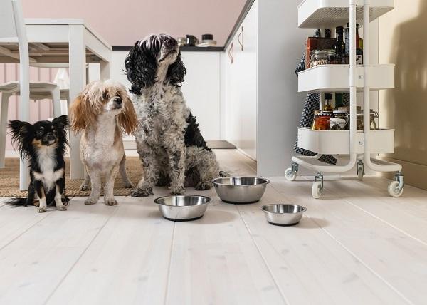 寵物食盆, 狗狗餐具, 貓咪餐具